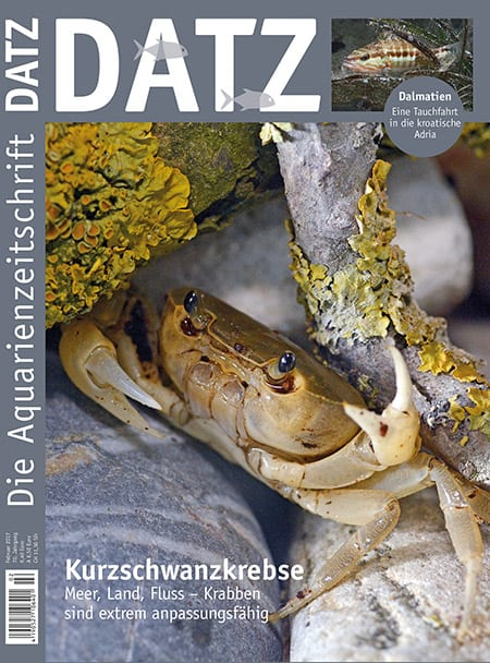 Datz 02/2017 erschienen - Blick ins Heft 1