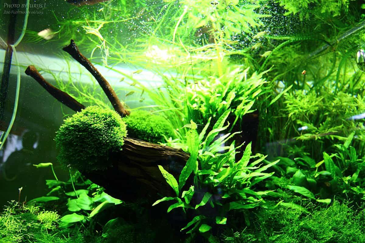 Podcast Episode #94: Die moderne Aquaristik und die Zoogeschäfte von morgen (Dieter Flottmann) 7