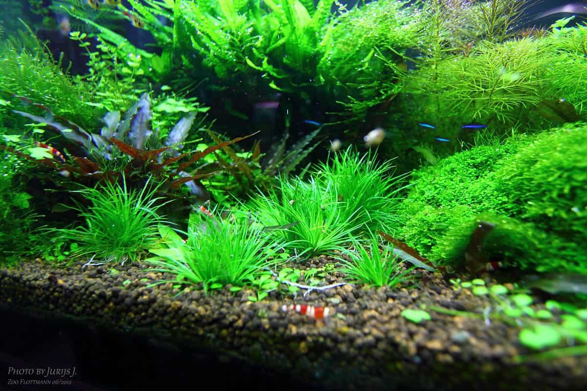 Podcast Episode #94: Die moderne Aquaristik und die Zoogeschäfte von morgen (Dieter Flottmann) 9