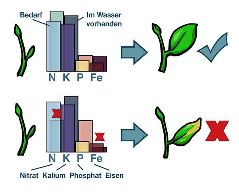 Was sind eigentlich Algen? 3