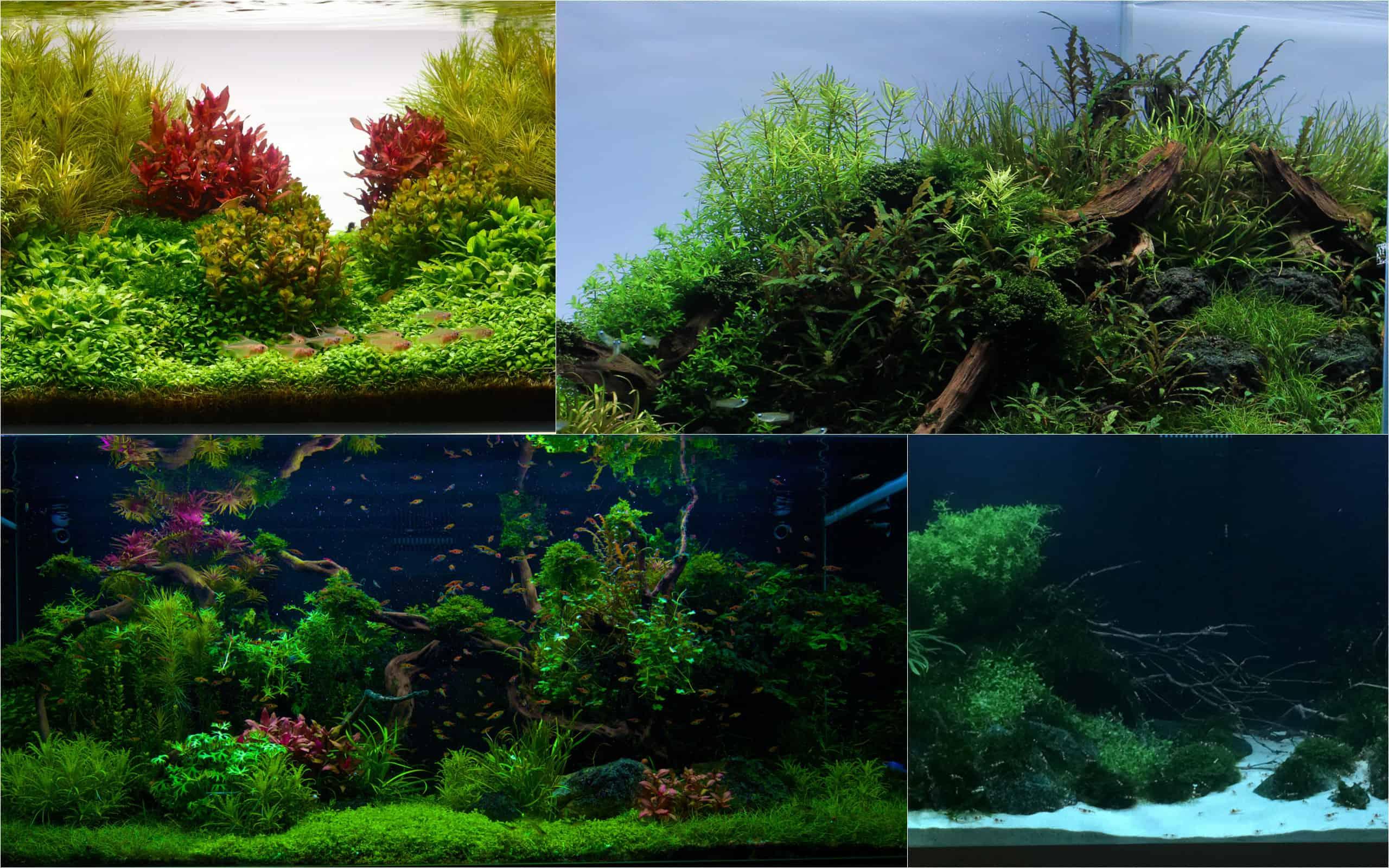 Die Aquarium Design Meisterschule: Kostenloser 3 Tage Workshop 1