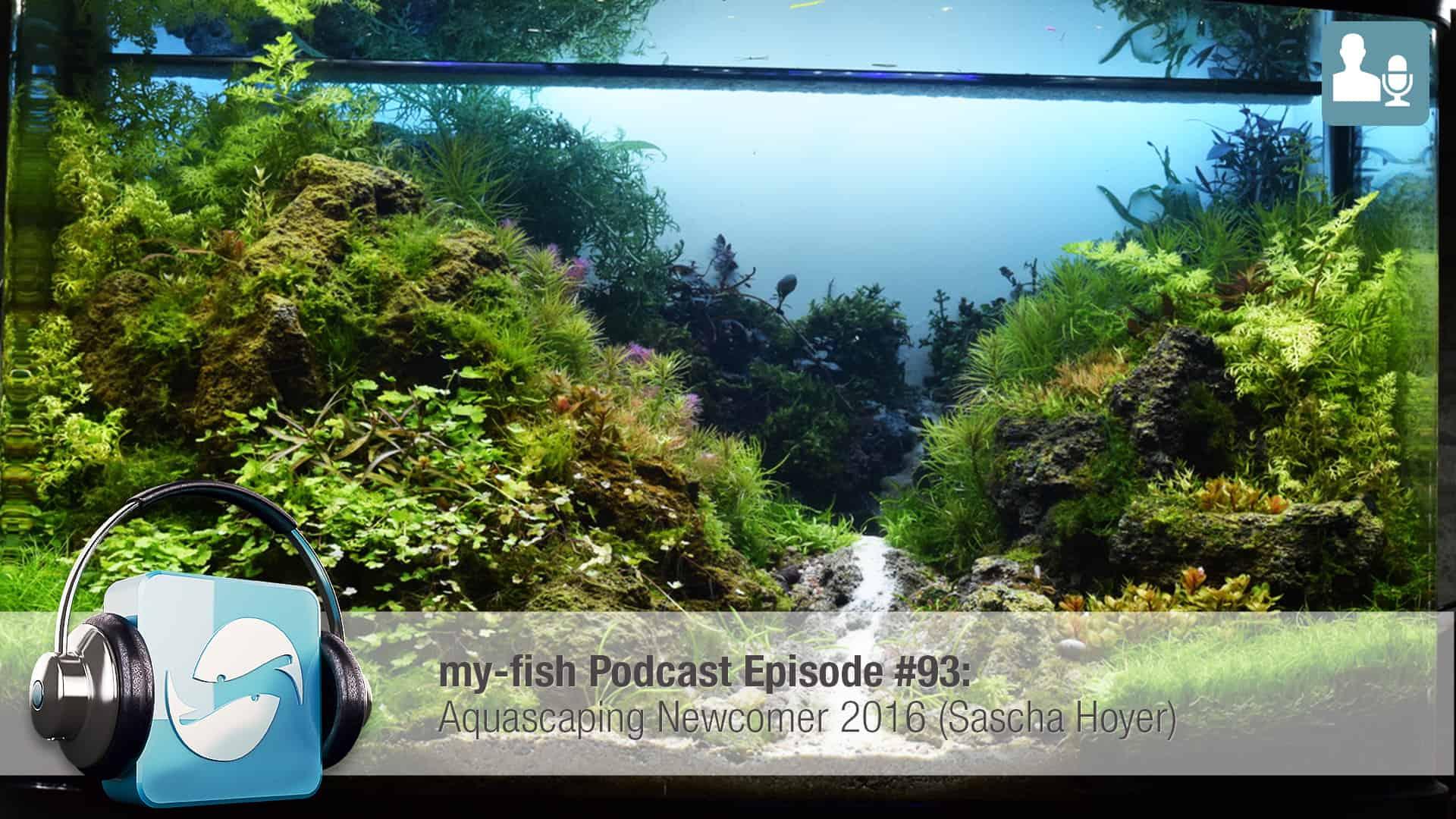 Podcast Episode #93: Aquascaping Newcomer 2016 (Sascha Hoyer) 1
