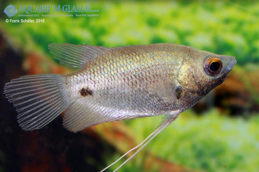 Raritäten & Neuimporte im Fokus 216 *Große Fische Spezial* 8