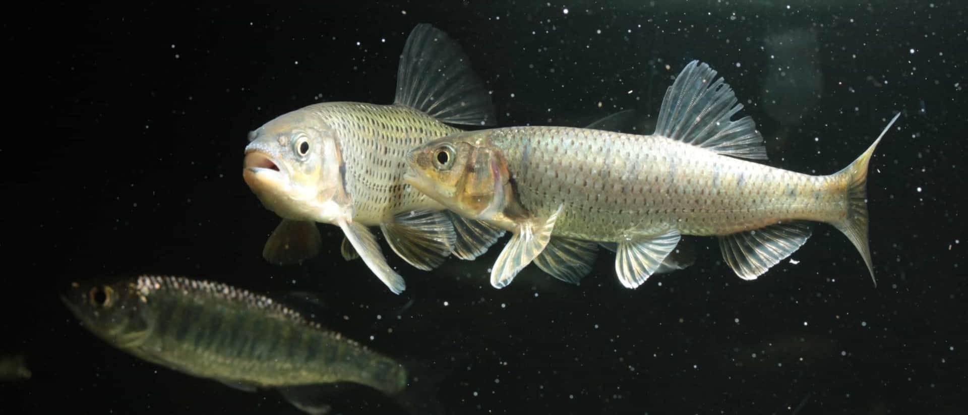 Podcast Episode #102: Die Aquaristik in Indien - Fischfangreisen und Szene Infos (Benjamin Harink) 3