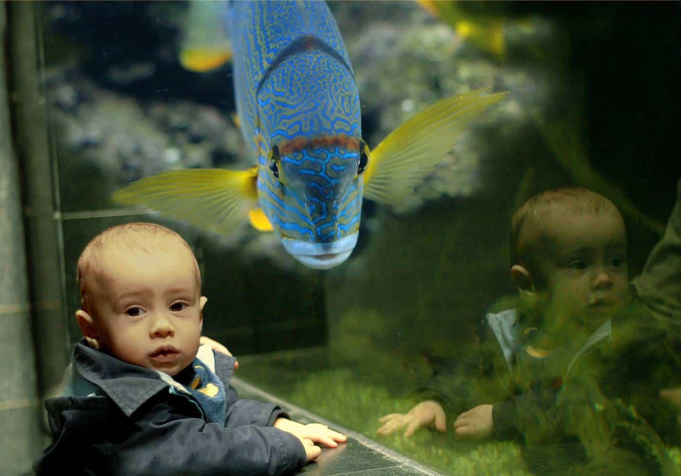Faszinierende Farbspiele im Aquarium - Stimmung von Fischen ist an ihrer Farbe zu erkennen 1