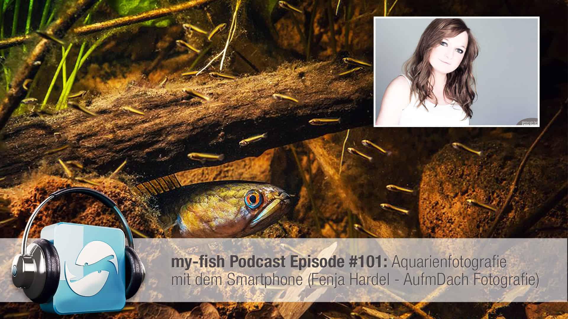 Podcast Episode #101: Aquarienfotografie mit dem Smartphone (Fenja Hardel - AufmDach Fotografie) 1
