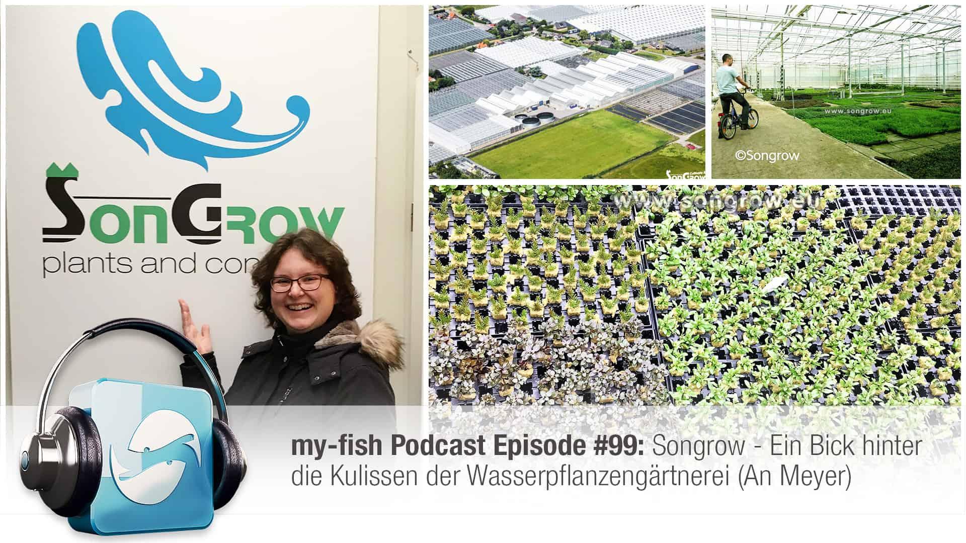 Podcast Episode #99: Songrow - Ein Bick hinter die Kulissen der Wasserpflanzengärtnerei (An Meyer) 1