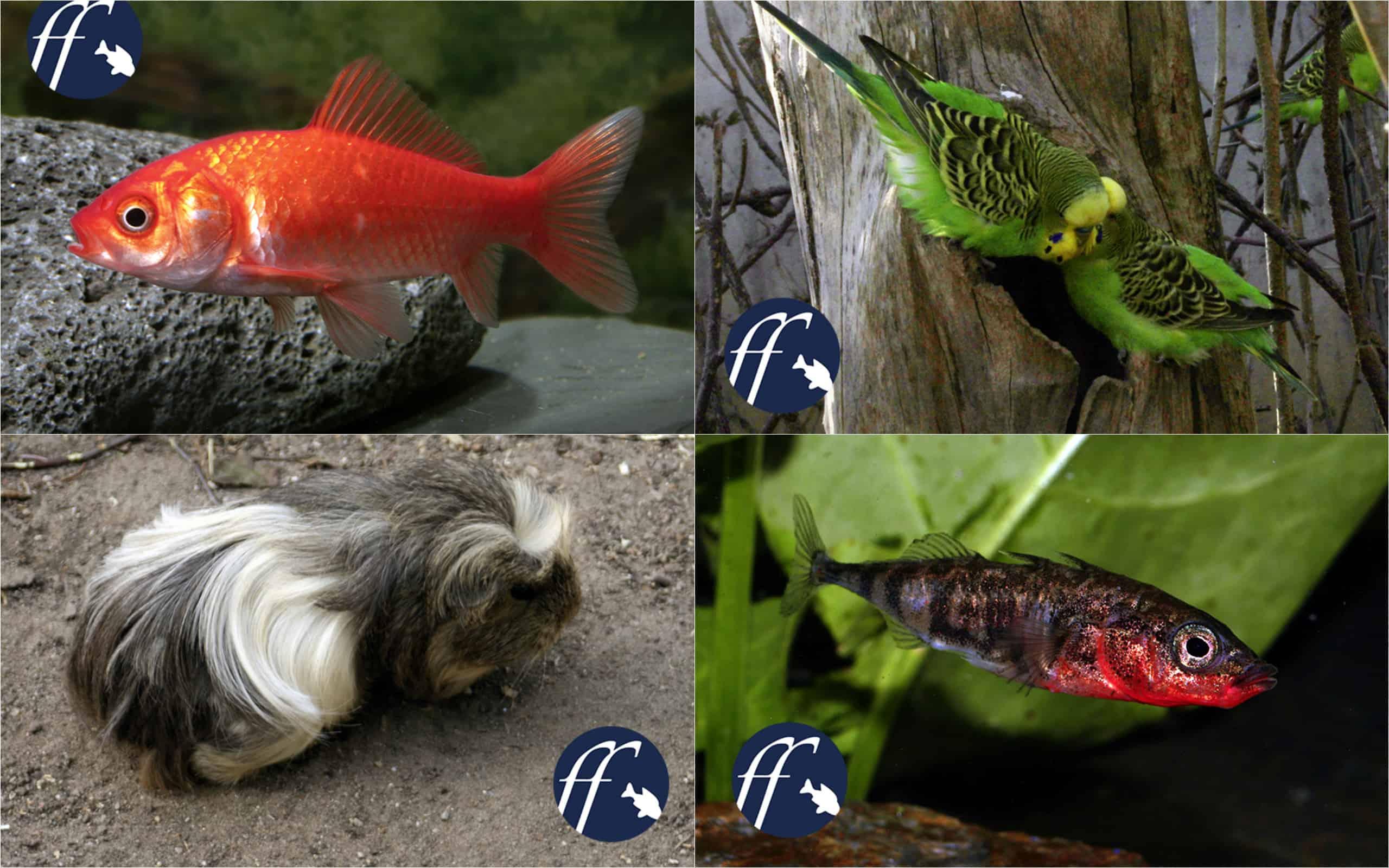 Franky Friday: Gehören Wildtiere in die Natur? 1