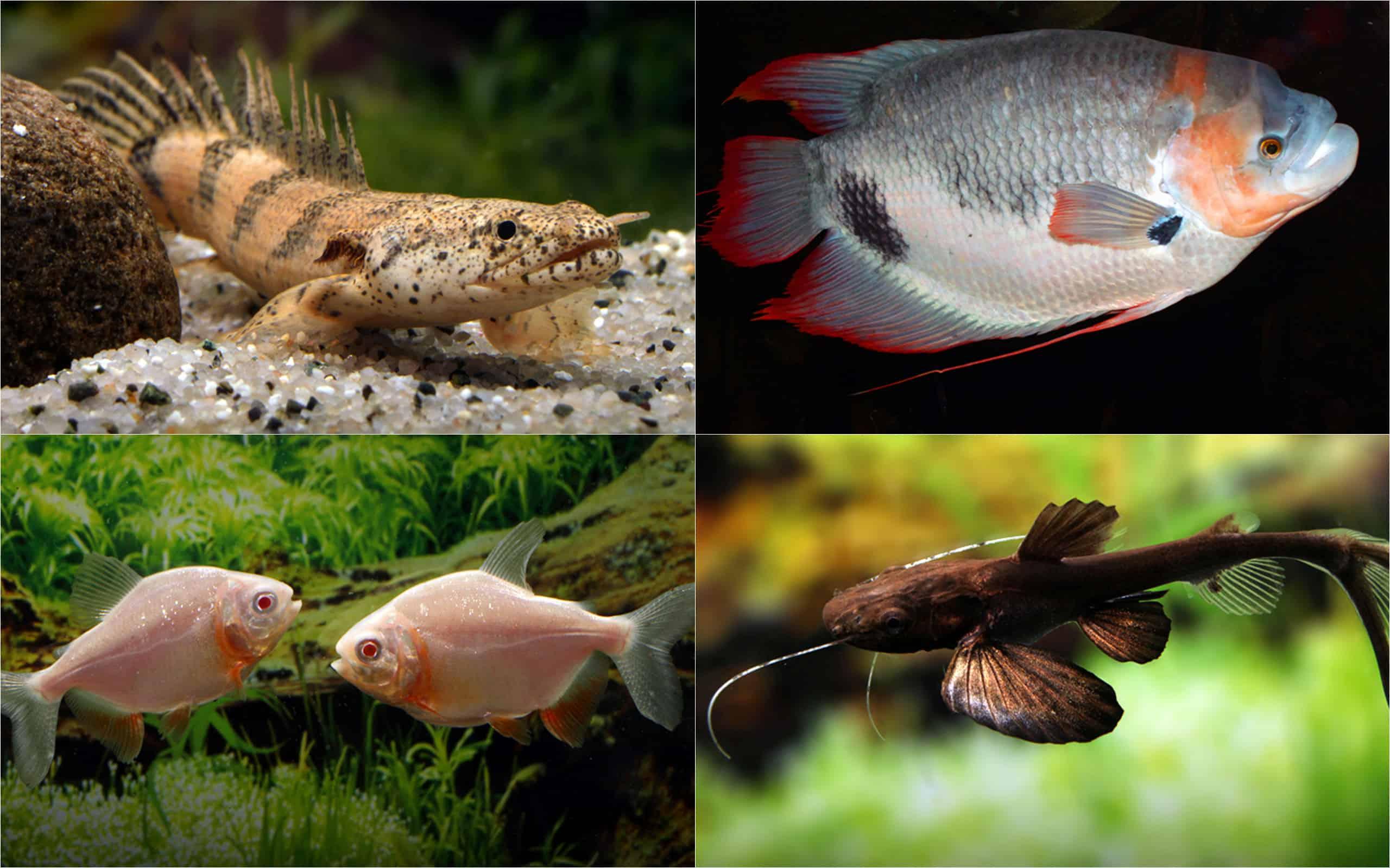 Raritäten & Neuimporte im Fokus 216 *Große Fische Spezial* 1