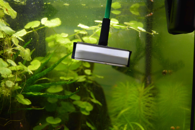 aquarium scheiben reinigen ohne kratzer wohn design. Black Bedroom Furniture Sets. Home Design Ideas
