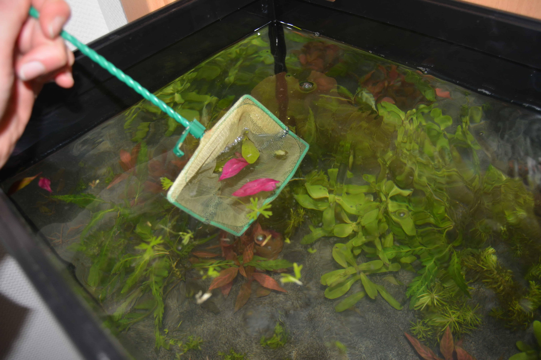 Zubehör Kleine Helferlein Im Und Am Aquarium My Fish