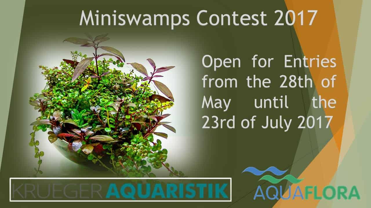 Miniswamps Contest 2017 - Jetzt anmelden 1