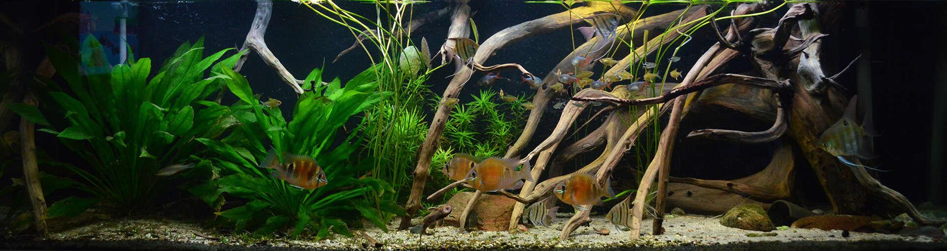Biotop-Aquarium: Ein Lebensraum wie in der Natur 3