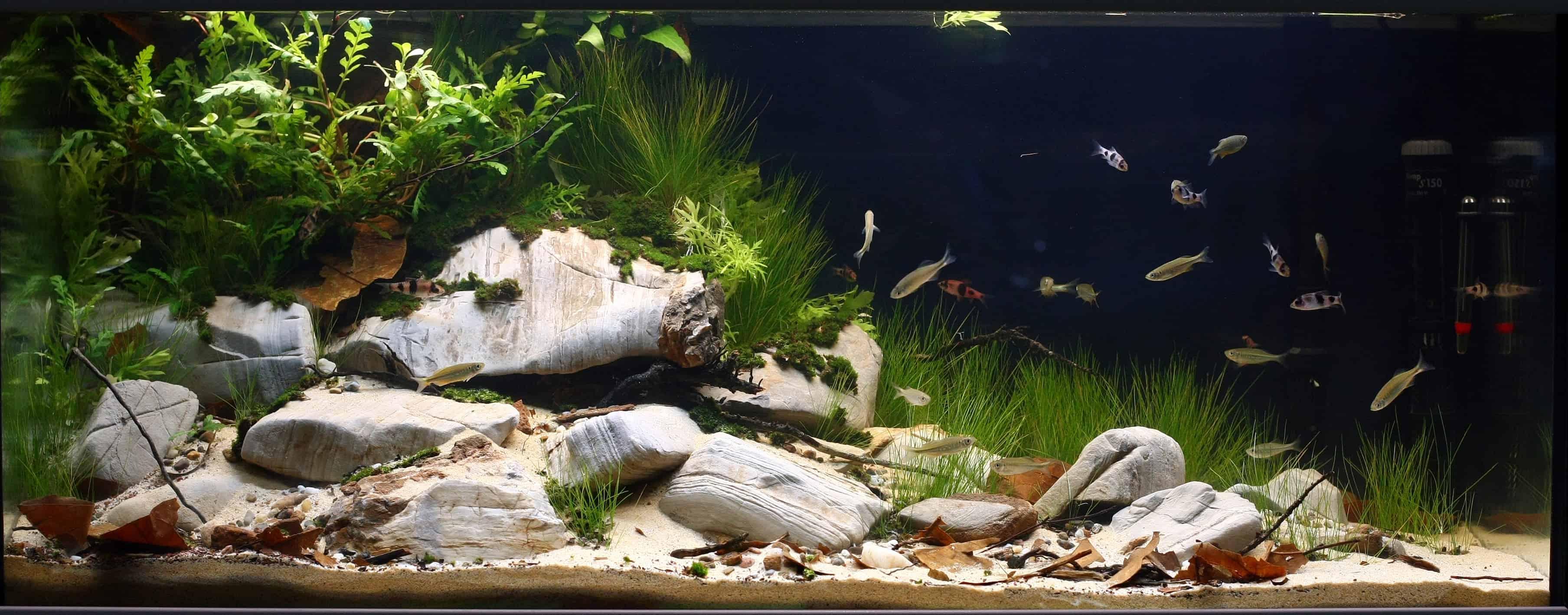 Biotop-Aquarium: Ein Lebensraum wie in der Natur 2