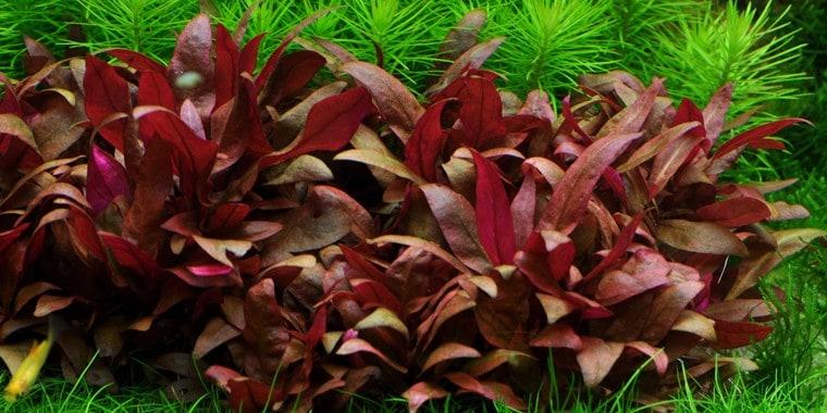 Podcast Episode #115: InVitro Pflanzen - Was ist das und welche Trends erwarten uns? (Anne Braun) 4