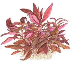 Podcast Episode #115: InVitro Pflanzen - Was ist das und welche Trends erwarten uns? (Anne Braun) 3