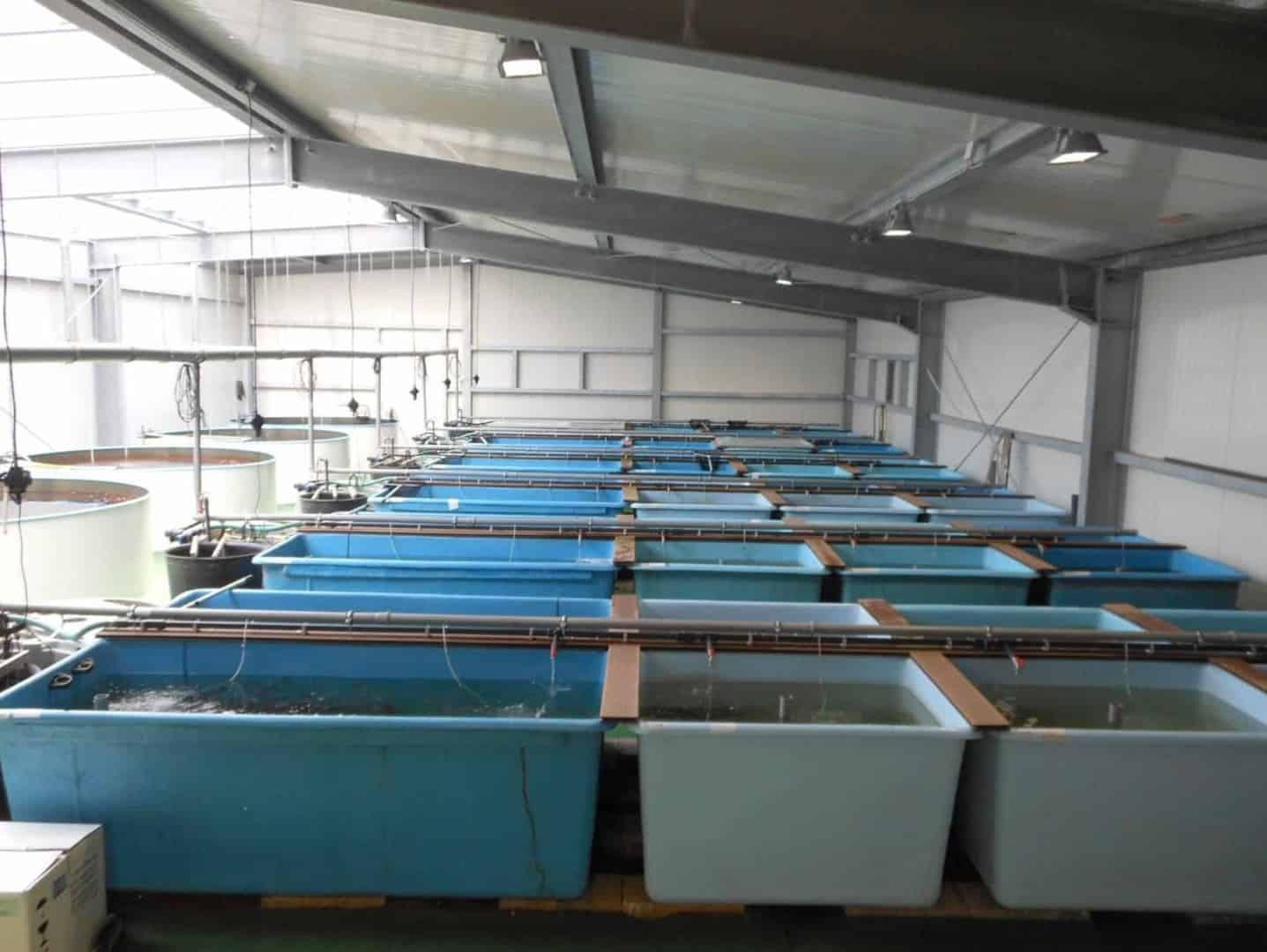 Zierfischgroßhandel Franke GmbH 4