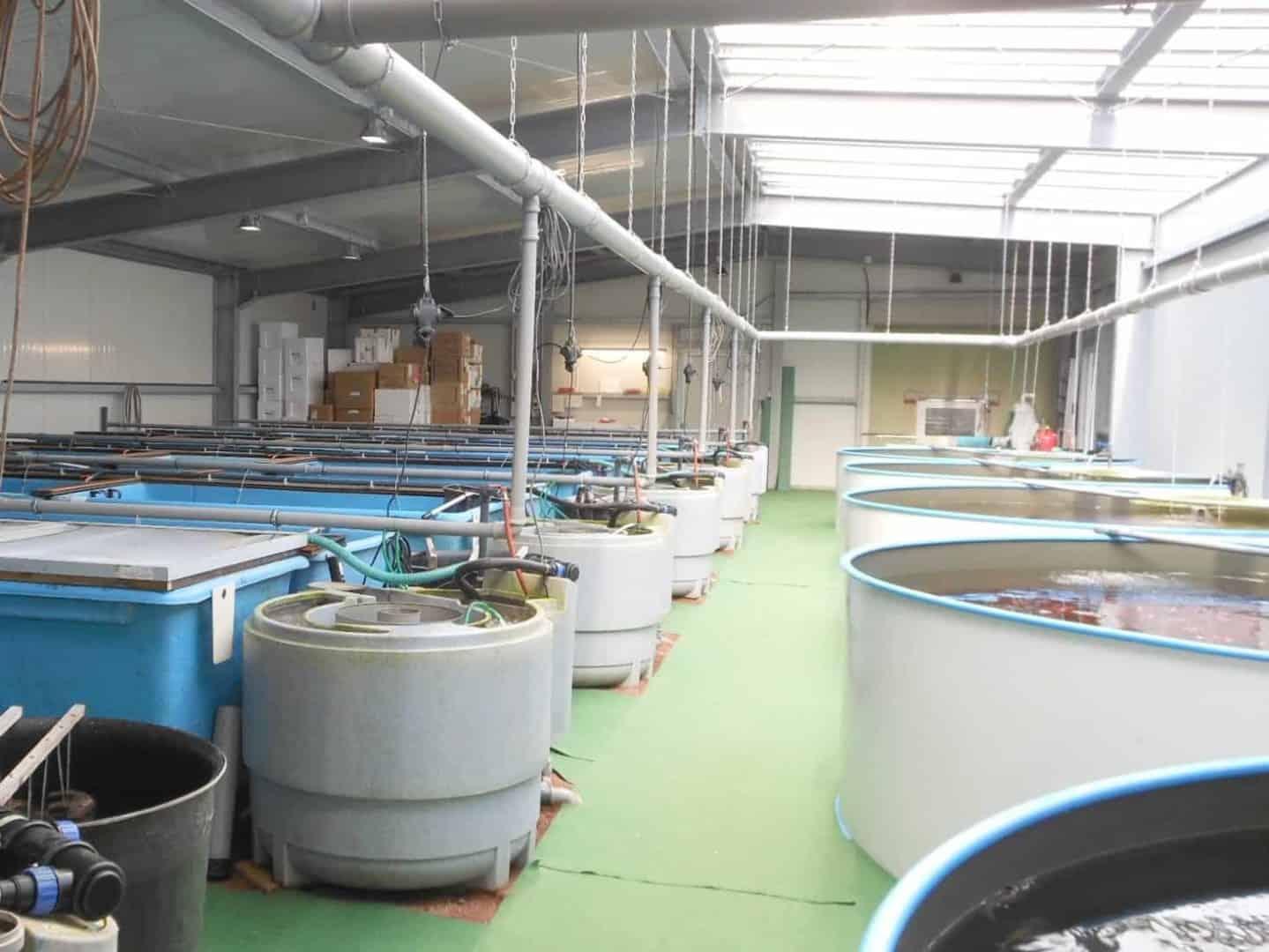Zierfischgroßhandel Franke GmbH 3