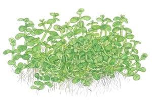 Podcast Episode #115: InVitro Pflanzen - Was ist das und welche Trends erwarten uns? (Anne Braun) 6