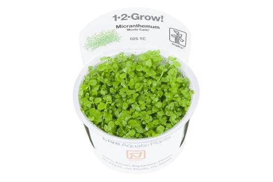 Podcast Episode #115: InVitro Pflanzen - Was ist das und welche Trends erwarten uns? (Anne Braun) 5