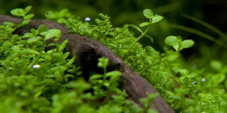 Podcast Episode #115: InVitro Pflanzen - Was ist das und welche Trends erwarten uns? (Anne Braun) 7