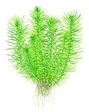 Podcast Episode #115: InVitro Pflanzen - Was ist das und welche Trends erwarten uns? (Anne Braun) 9