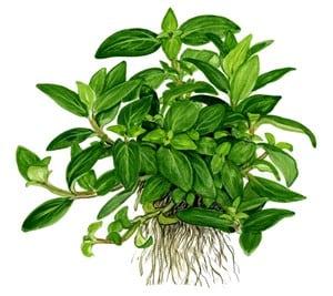 Podcast Episode #115: InVitro Pflanzen - Was ist das und welche Trends erwarten uns? (Anne Braun) 12