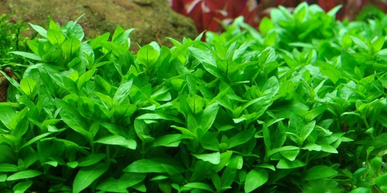 Podcast Episode #115: InVitro Pflanzen - Was ist das und welche Trends erwarten uns? (Anne Braun) 13