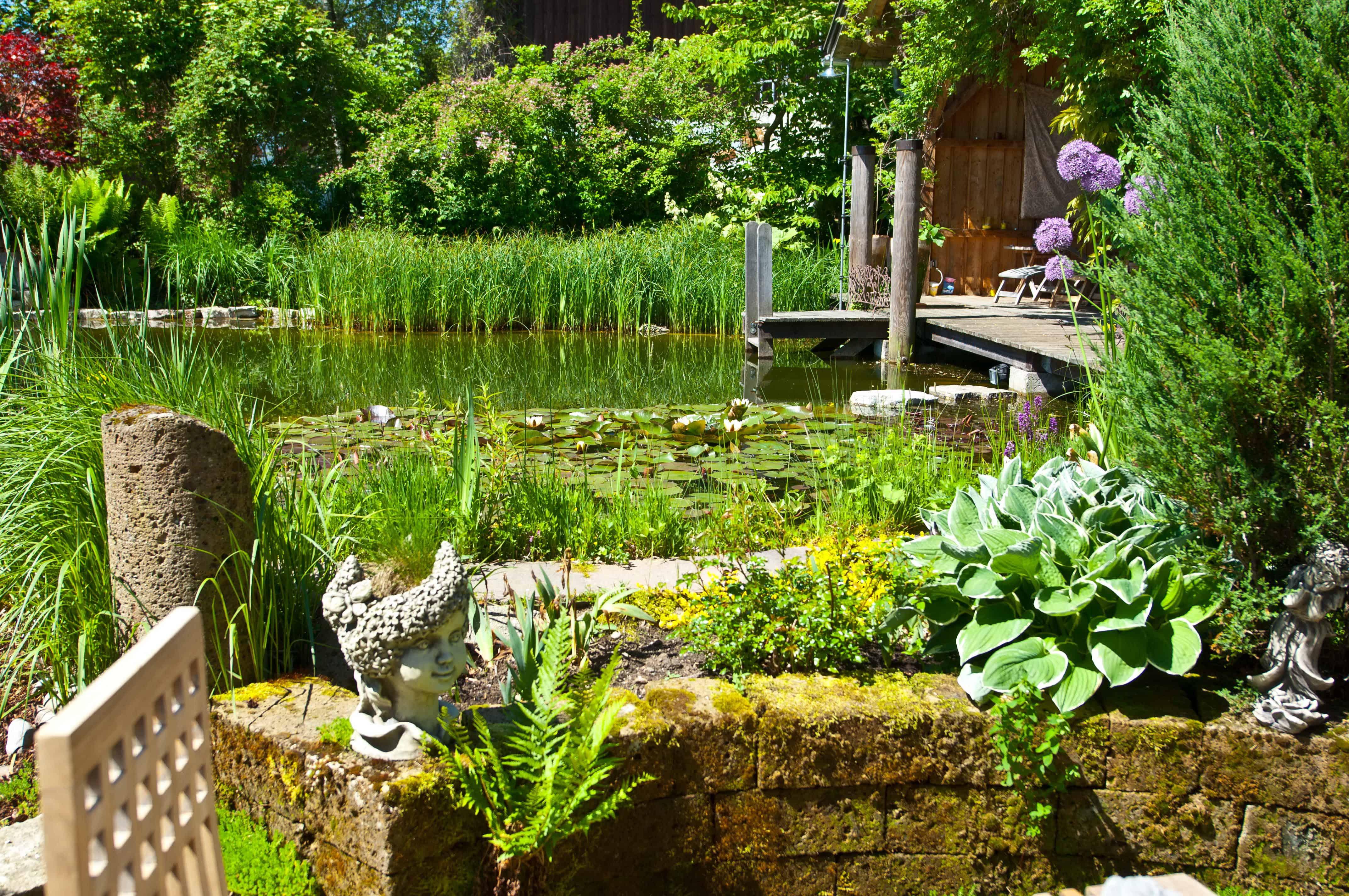 Faszination Teich - Hohe Anziehungskraft bei Mensch und Tier 1