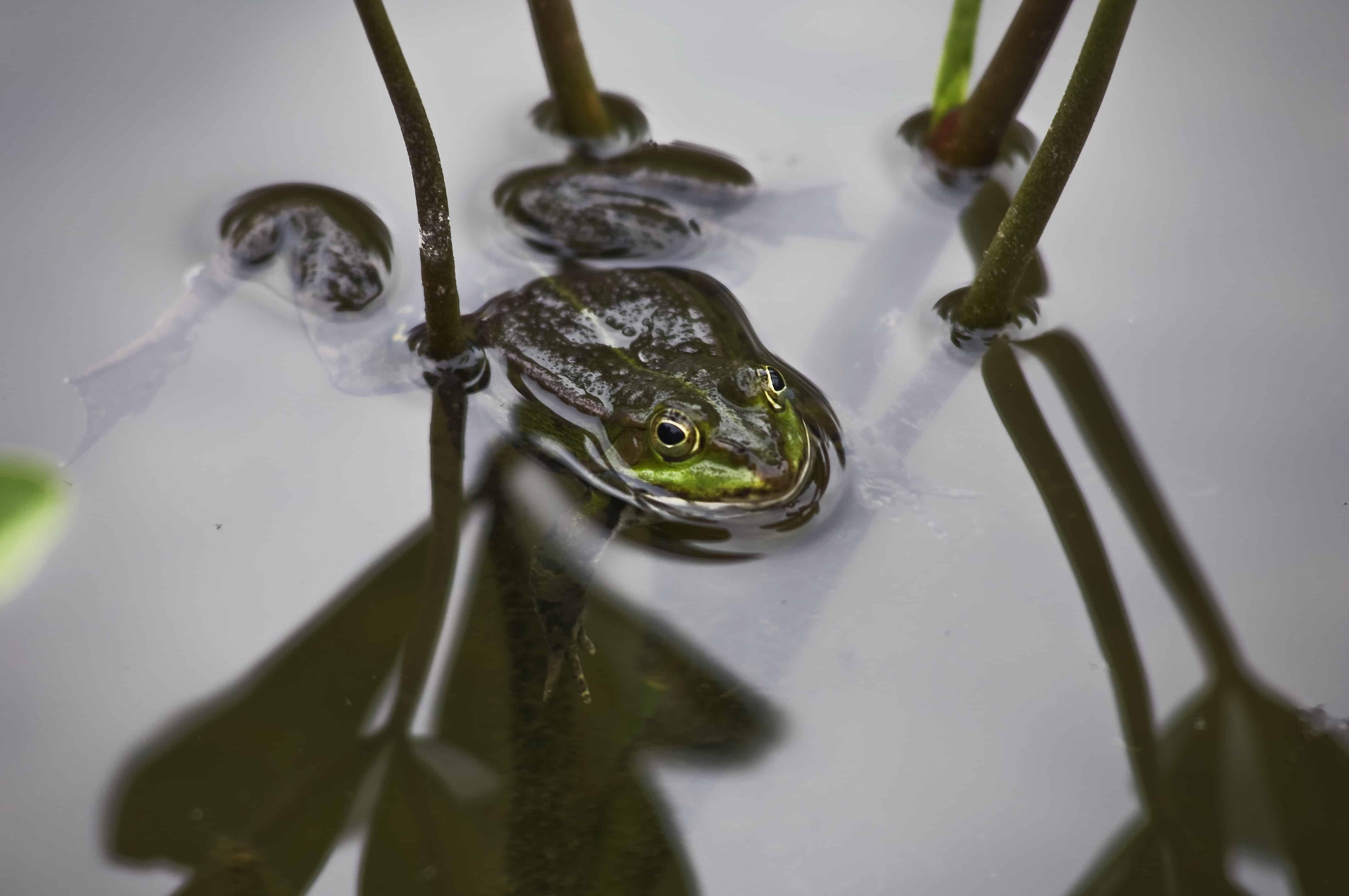 Faszination Teich - Hohe Anziehungskraft bei Mensch und Tier 2