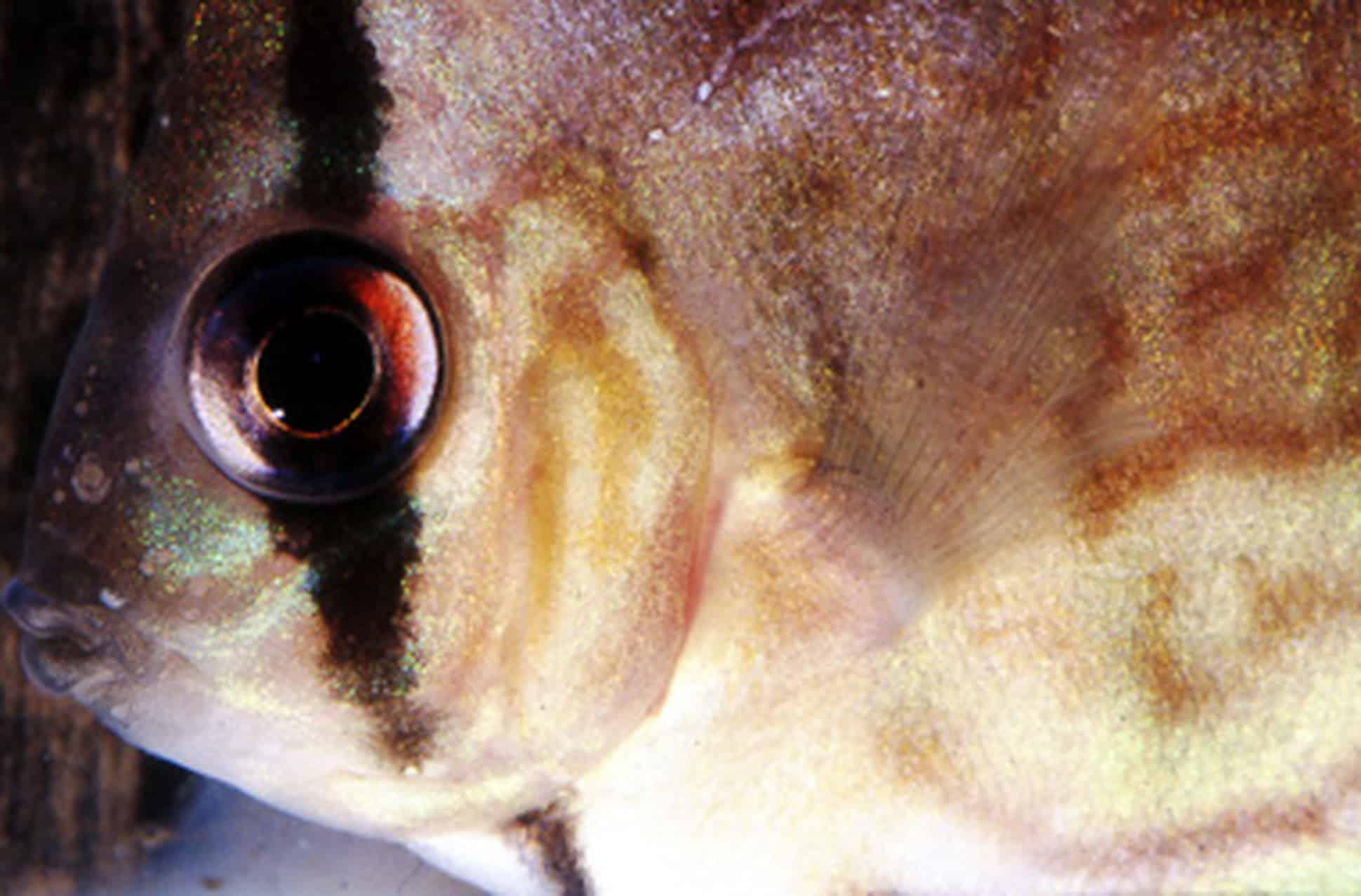 h ufige krankheiten und st rungen im aquarium my fish. Black Bedroom Furniture Sets. Home Design Ideas