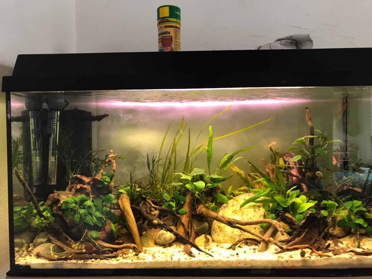 Podcast Episode #117: Das Kindergarten Aquarium (Florian Breindl) 5