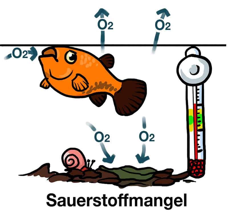 Luftpumpe Kids Aquarium Sauerstoffmangel