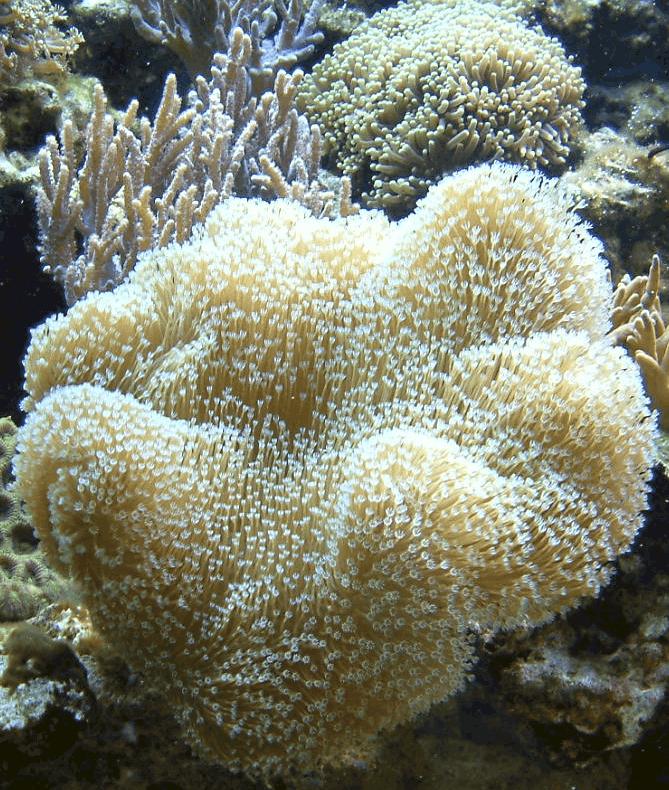 Podcast Episode #119: Das erste Meerwasseraquarium (Markus Mahl) 14