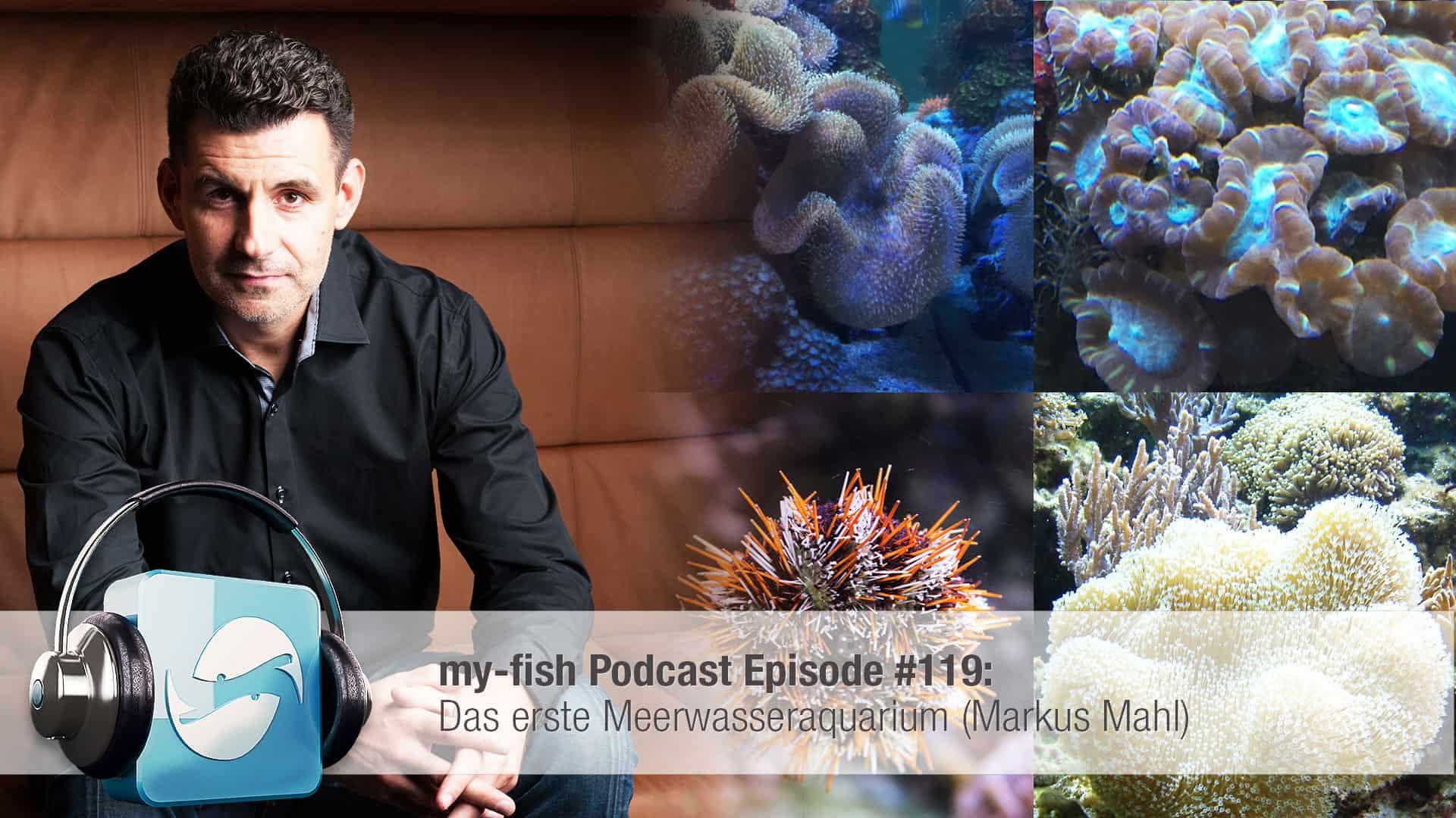 Podcast Episode #119: Das erste Meerwasseraquarium (Markus Mahl) 1