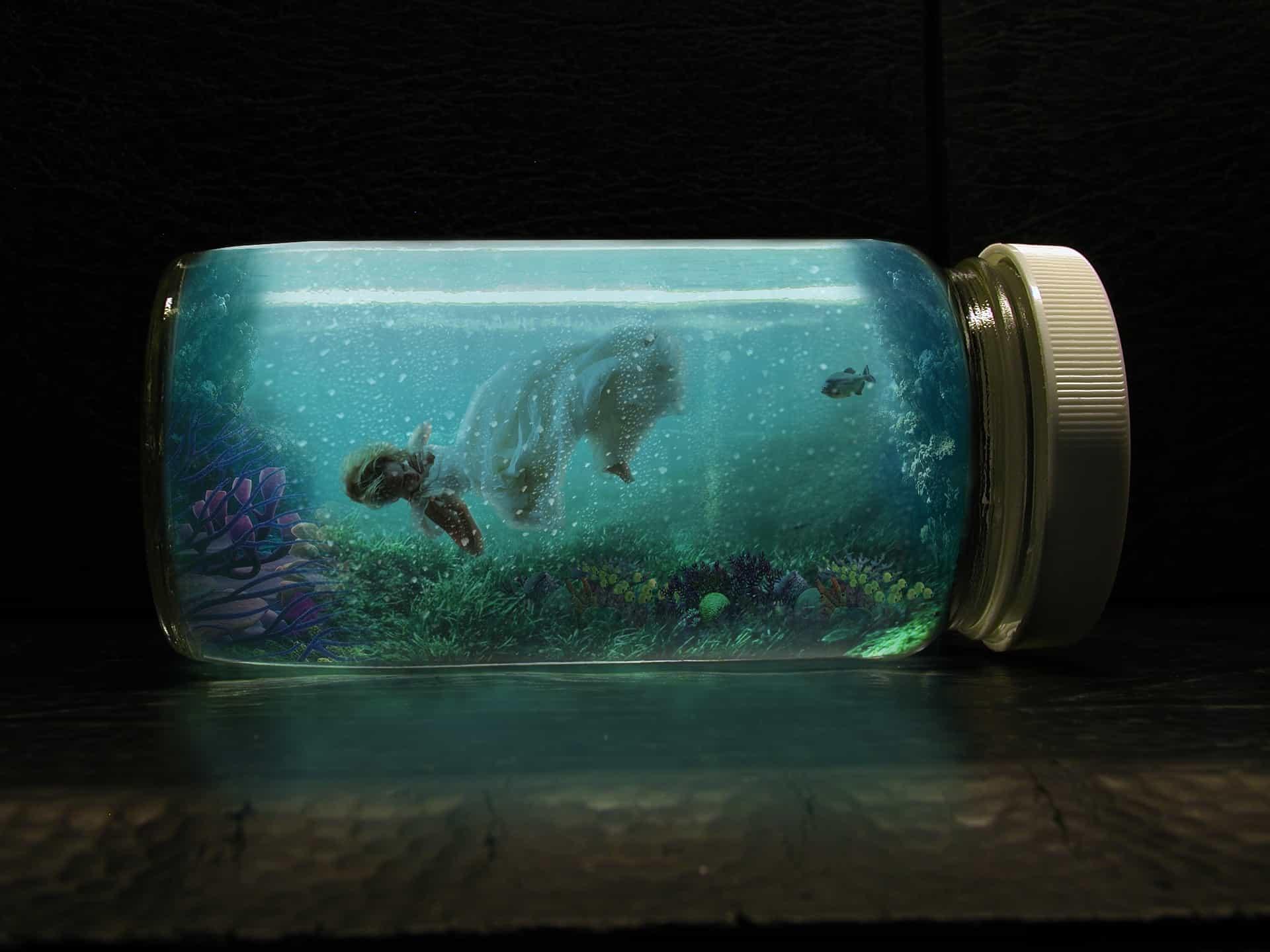 Nano Aquarien  u2013 Alles  u00fcber Pflege und Haltung der Nano Becken Bewohner   my fish