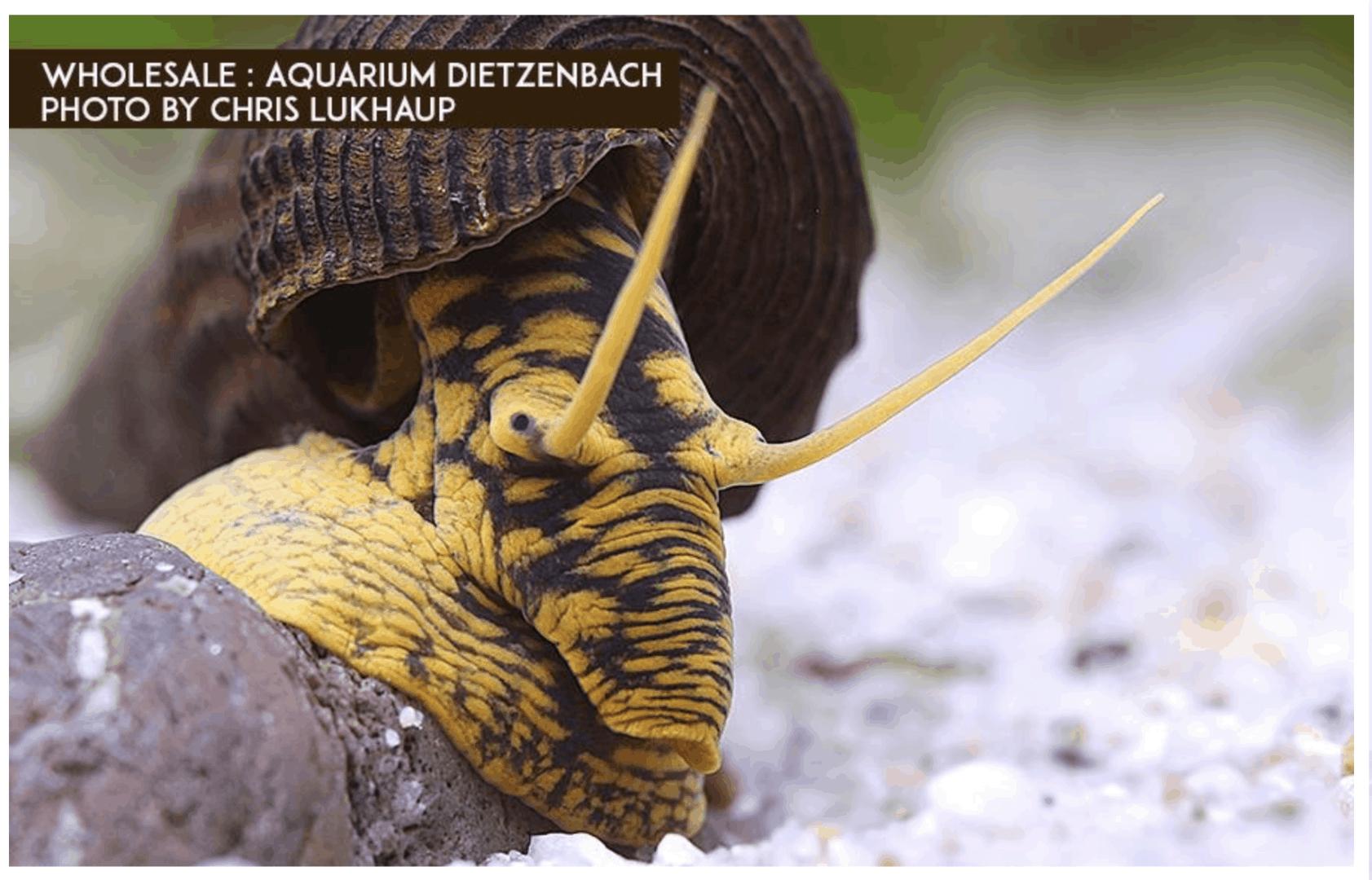 Podcast Episode #120: Das Schneckenaquarium (Alexandra Behrendt) 7