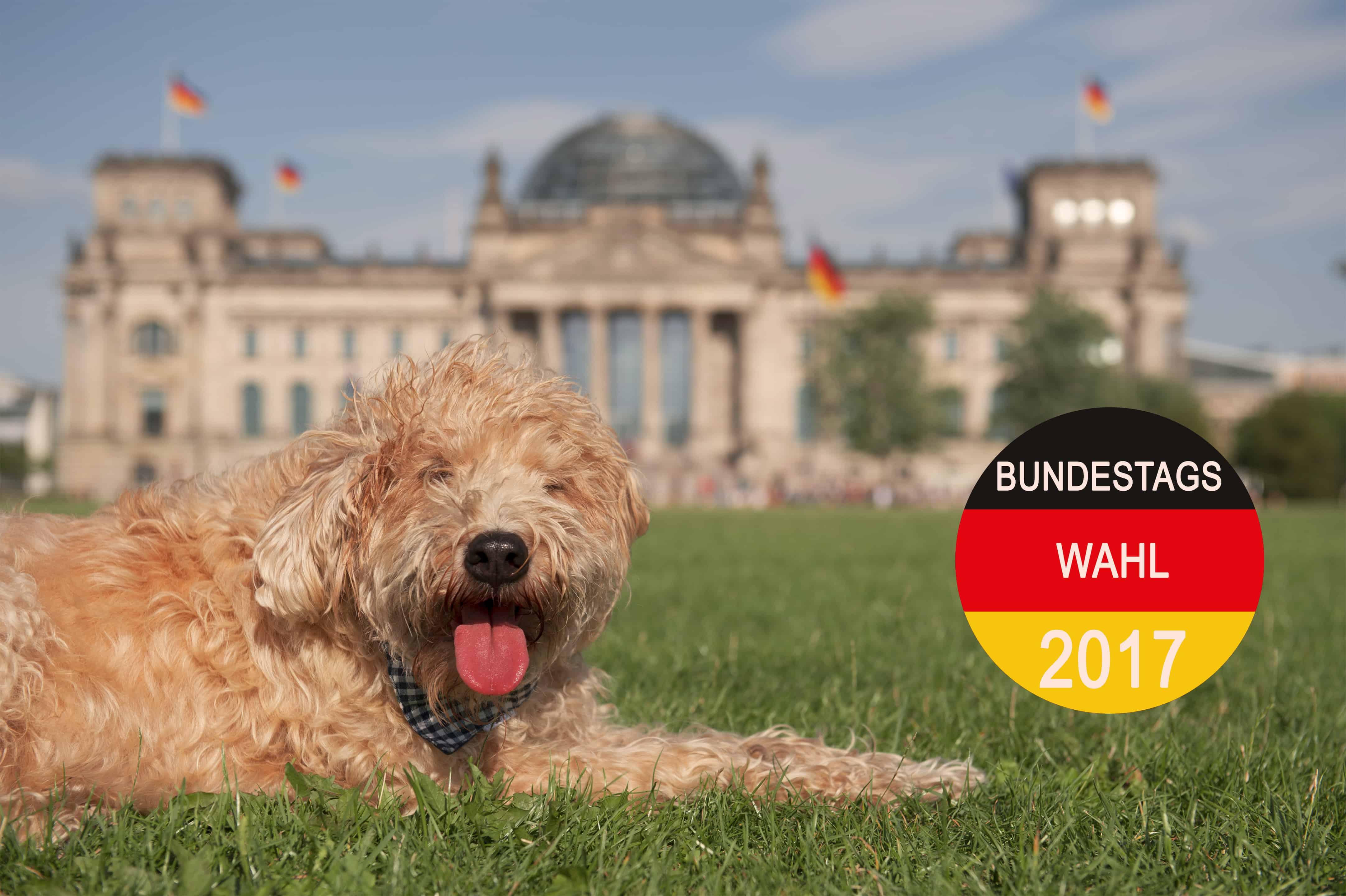 Wahlprüfsteine zur Bundestagswahl: Parteien äußern sich zur Tierhaltung 1