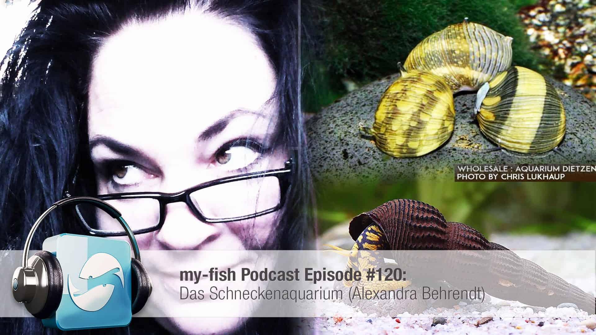 Podcast Episode #120: Das Schneckenaquarium (Alexandra Behrendt) 1
