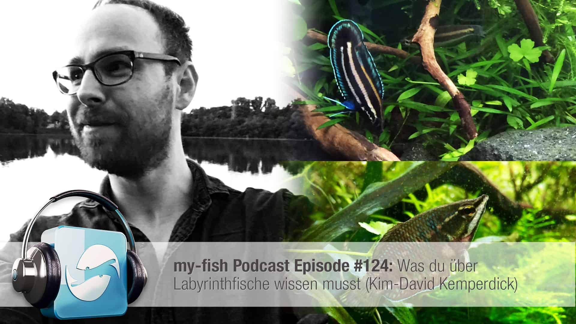 Podcast Episode #124: Was du über Labyrinthfische wissen musst (Kim-David Kemperdick) 1