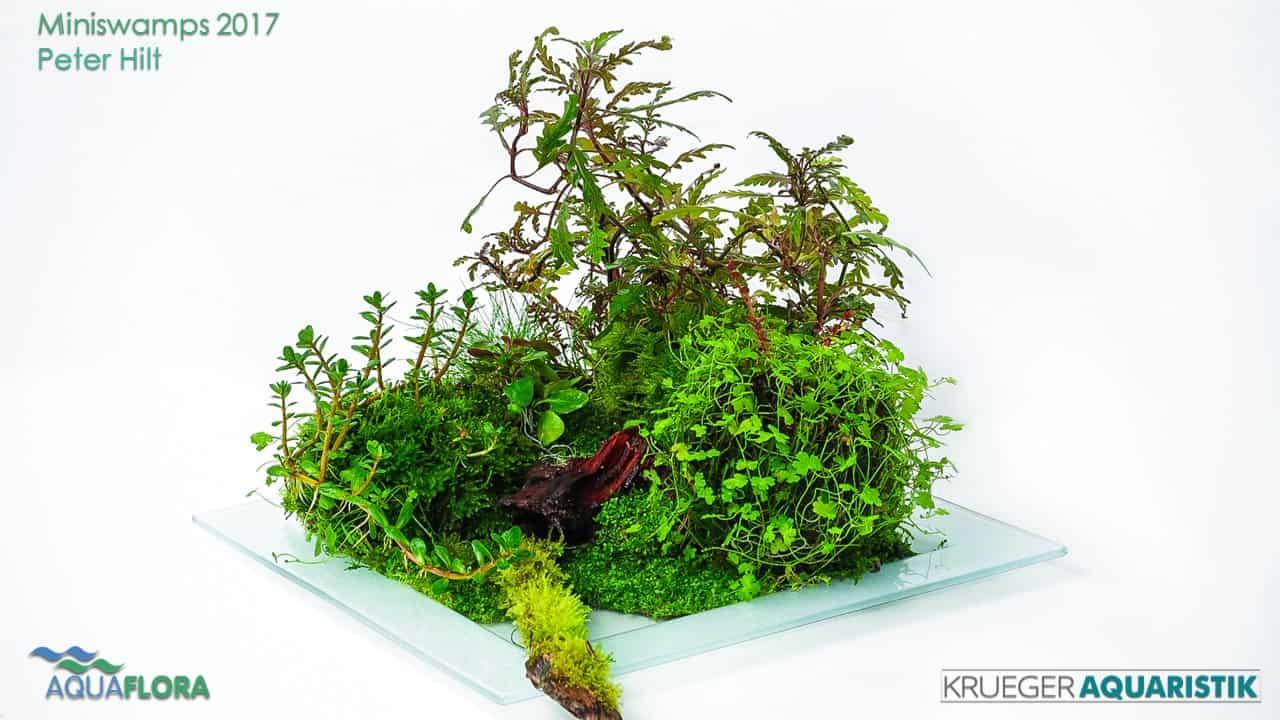Die Ergebnisse des Miniswamps Contest 13