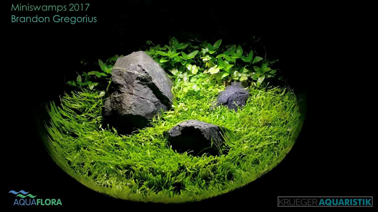 Die Ergebnisse des Miniswamps Contest 24