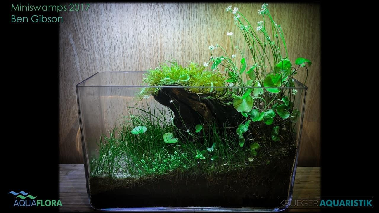 Die Ergebnisse des Miniswamps Contest 28
