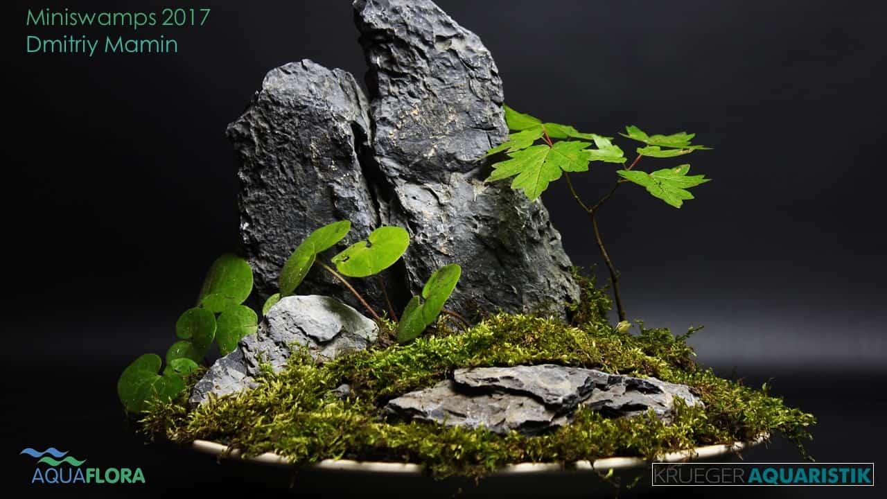 Die Ergebnisse des Miniswamps Contest 35