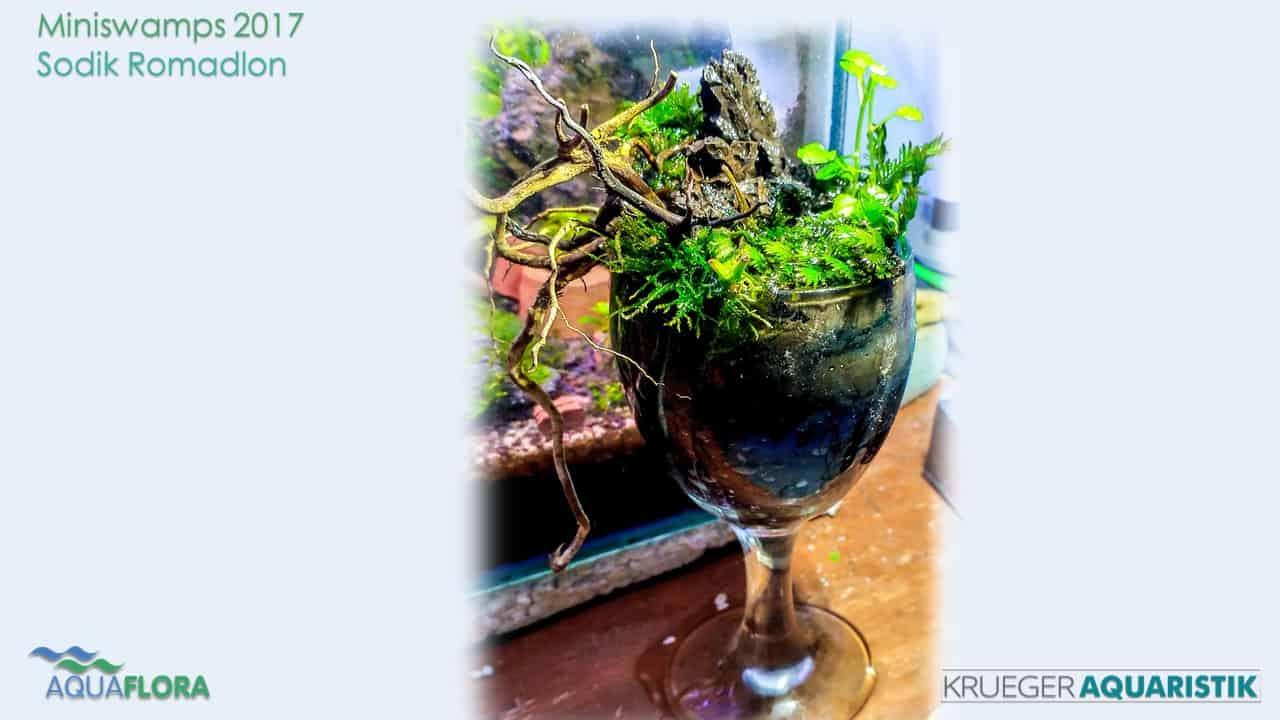 Die Ergebnisse des Miniswamps Contest 38