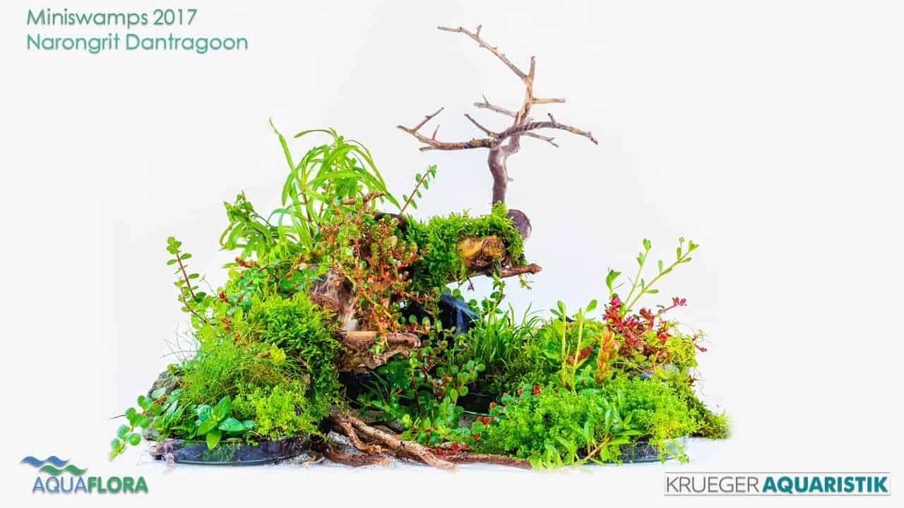 Die Ergebnisse des Miniswamps Contest 6
