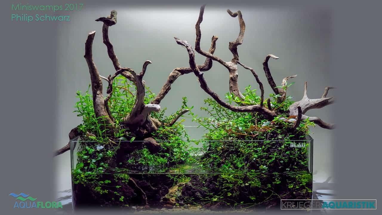 Die Ergebnisse des Miniswamps Contest 7