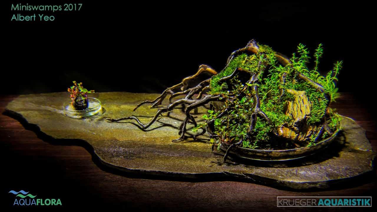 Die Ergebnisse des Miniswamps Contest 8