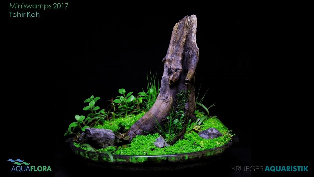 Die Ergebnisse des Miniswamps Contest 9