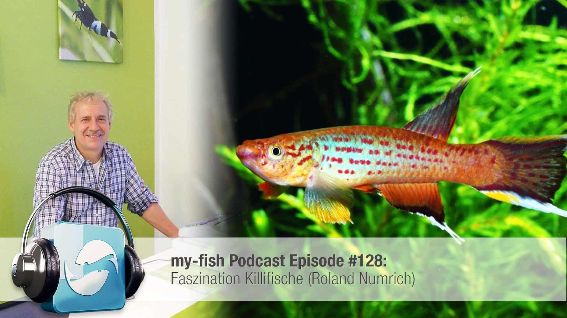 Podcast Episode #128: Faszination Killifische (Roland Numrich) 1